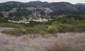 Typical landscape in the East Bay Hills
